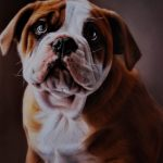 pet portrait painting sussex - dog